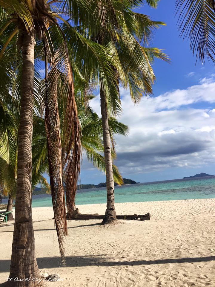 17- Palm tree