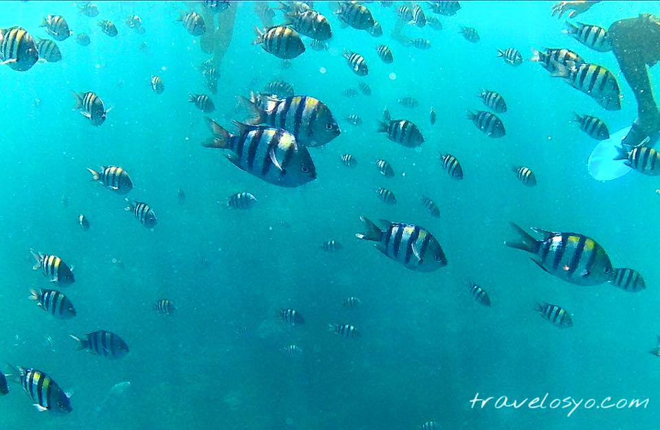 19-Underwater