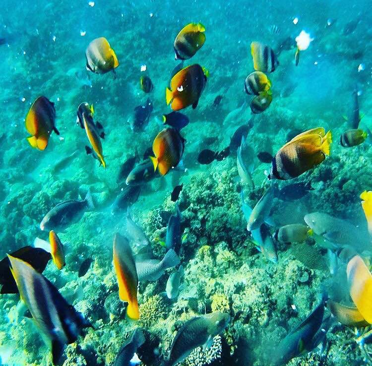 Batangas Diving